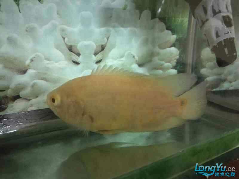请问这是什么鱼是热带鱼吗?饲养注意什么?谢谢 郑州水族批发市场