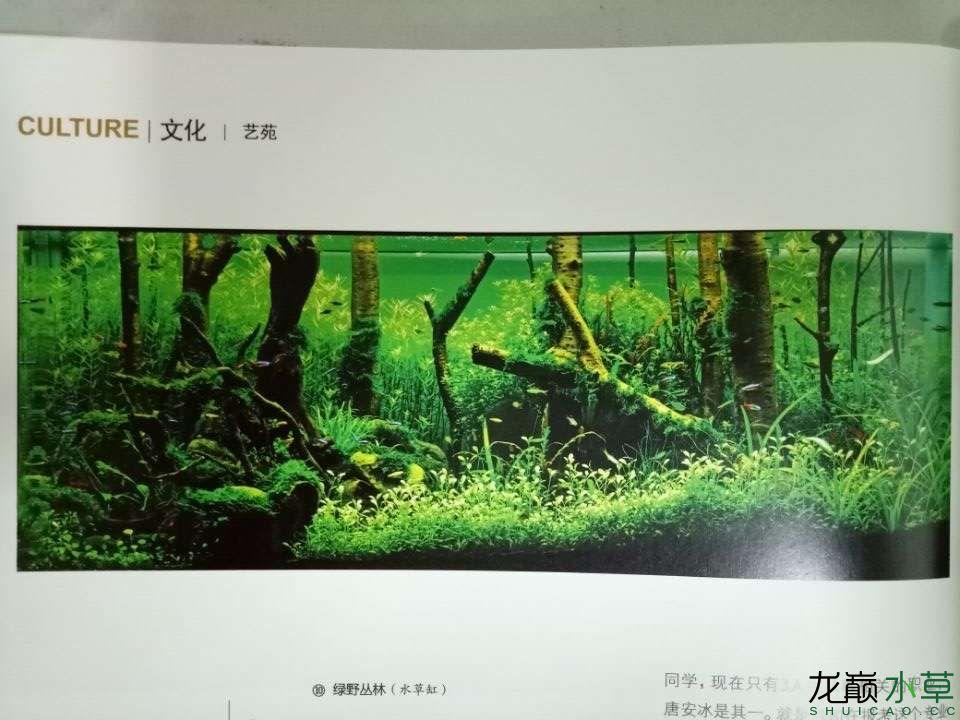 《绿野丛林》水草被刊载《重庆与世界》杂志2016年6月刊 个人专访上了