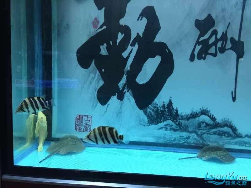 鱼不在好在于喜欢 贵阳龙鱼论坛 贵阳龙鱼第3张
