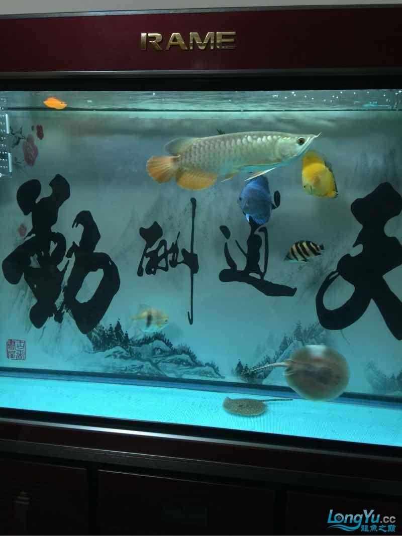 鱼不在好在于喜欢 贵阳龙鱼论坛 贵阳龙鱼第5张