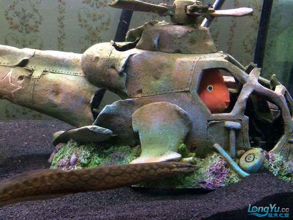鹦鹉就是个逗鱼 南昌水族批发市场 南昌龙鱼第1张