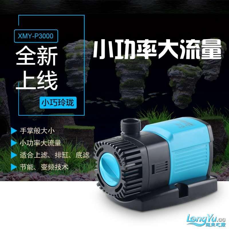 潜水泵.jpg