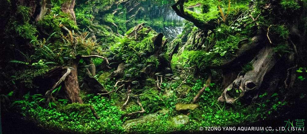 第8名 – 法國 – REINKE – The Totoro forest – 320L 以上.jpg