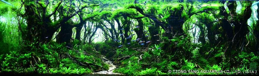 第9名 – 越南 – Quoc Vinh Luong – Mysterious forest – 200L ~ 320L.jpg