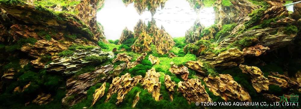 第12名 – 中國大陸 – 韦素妮 – 涅磐重生 – 200L ~ 320L.jpg