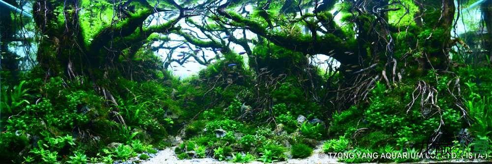 第17名 – 越南 – Quoc Vinh Luong – Flooded forests – 320L 以上.jpg