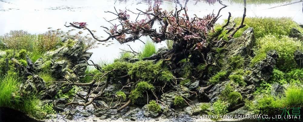 第18名 – 法國 – Ludo BOURDIN – Princess Sakura and the Dragon tree – 320L 以.jpg