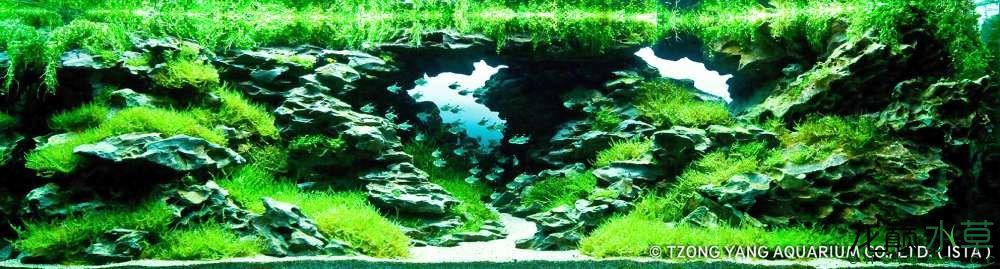 第20名 – 香港 – Michael G.W. Wong – The Cave – 320L 以上.jpg