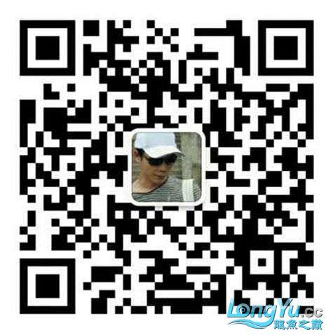 675912219094238535.jpg