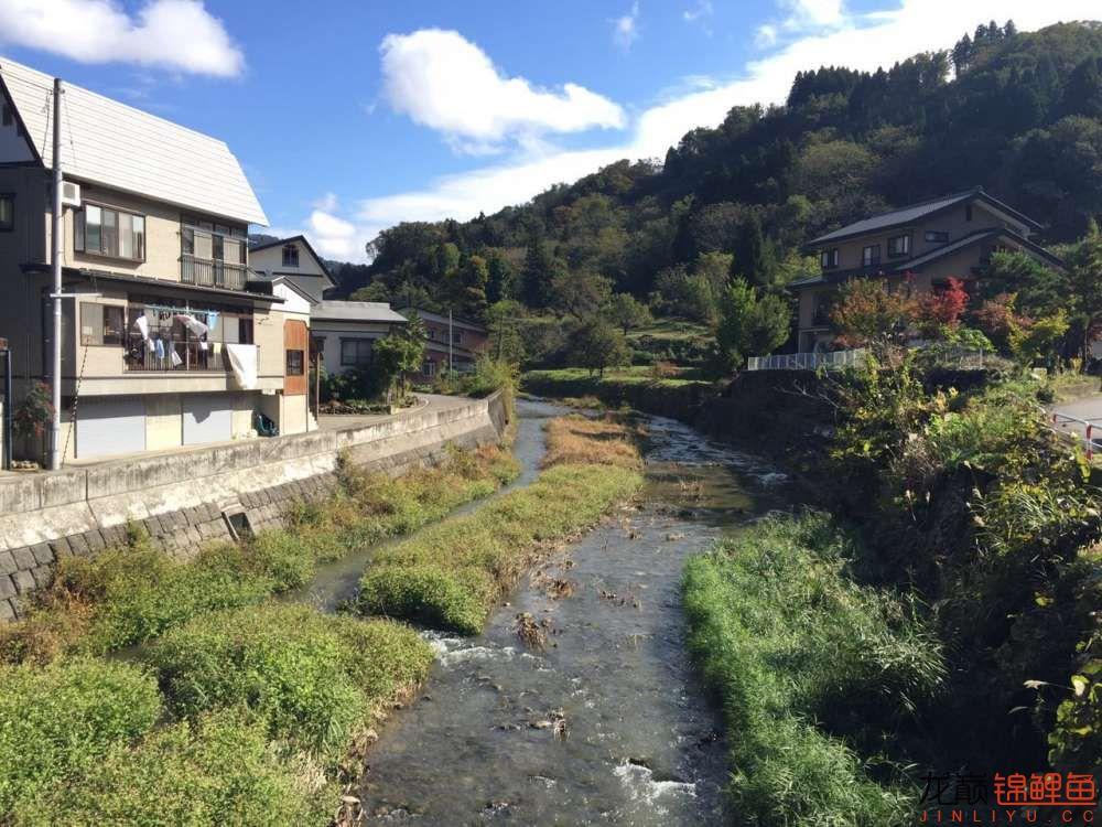 日本 (3).JPG