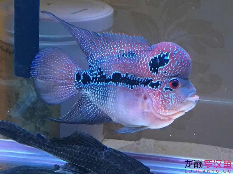 小鱼加小缸 龙鱼论坛 祥龙水族联盟第5张