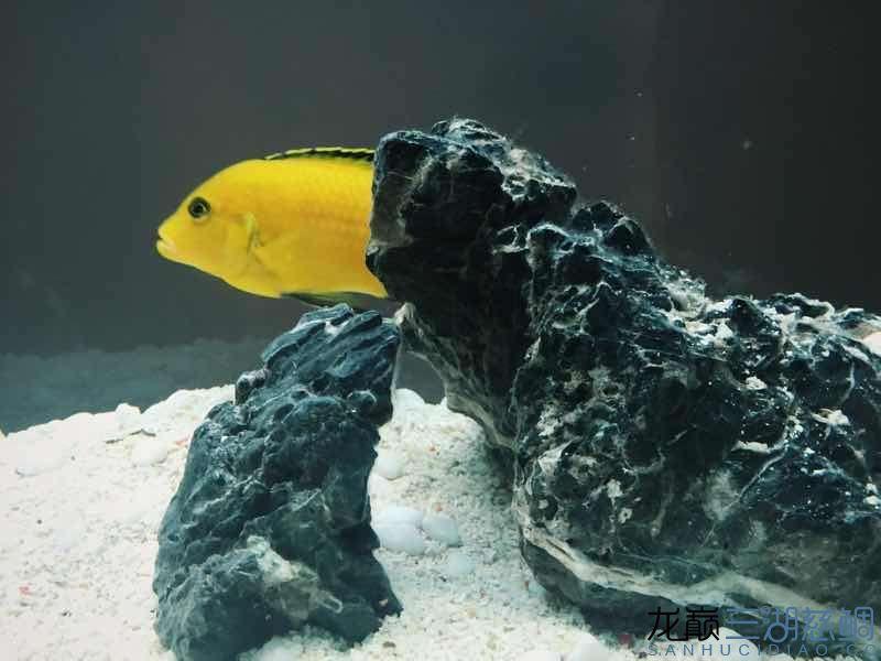 进5条新鱼两周~除兜口被咬外小布隆迪居然还悠然自得 兰州龙鱼论坛 兰州龙鱼第2张