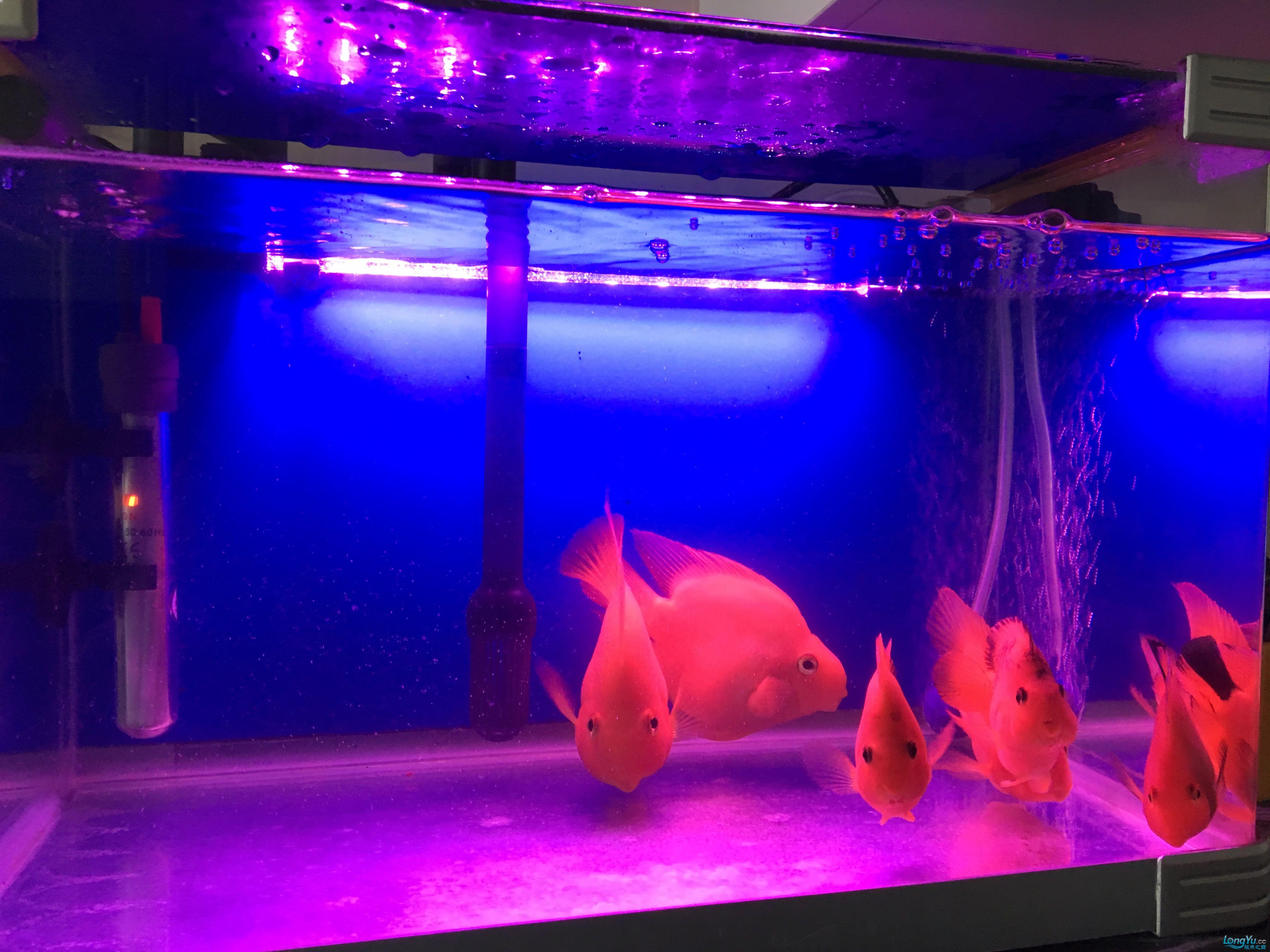丽水鱼缸定制定做水都不清的 龙鱼论坛 祥龙水族联盟第2张