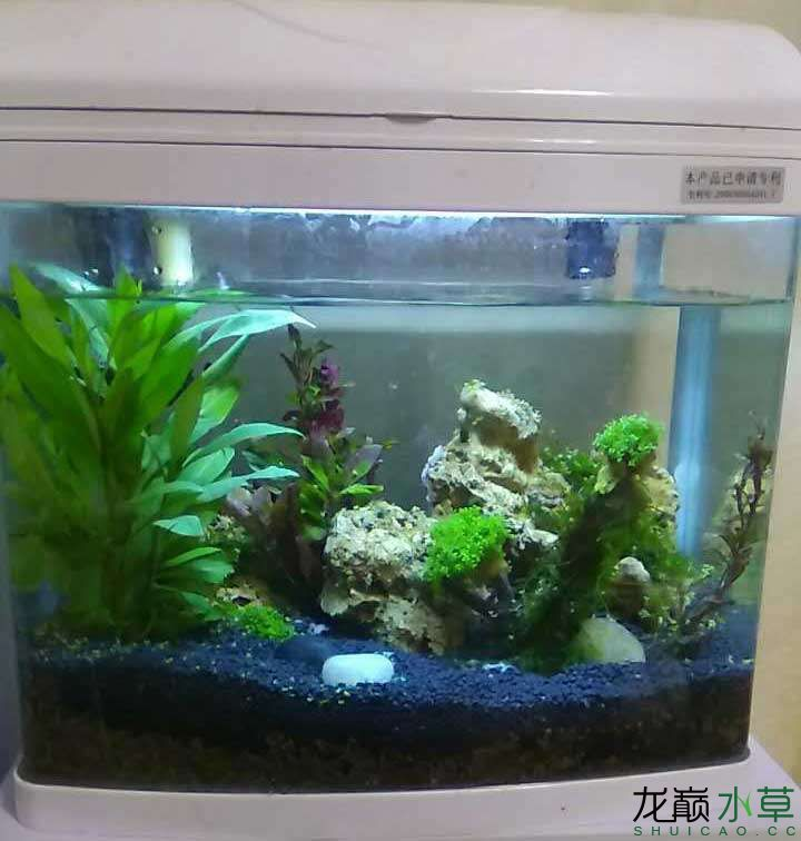 Please give pointers to the small tanks arranged by pure novices can you put fish now? Thank you