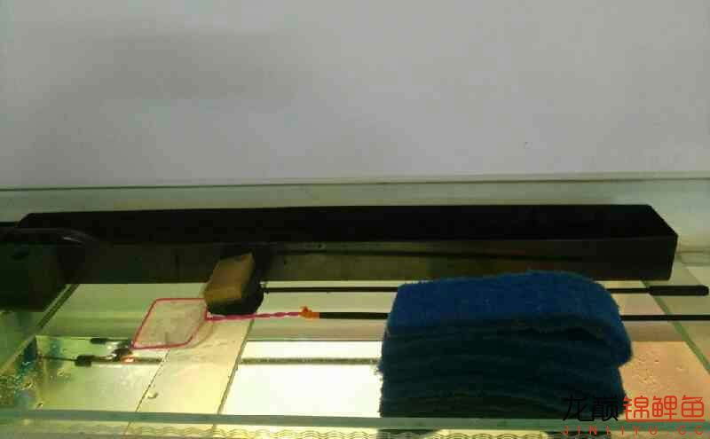 上海大帆鱼价格养鲤大揭秘我的生化滤棉和小水槽 上海水族批发市场 上海龙鱼第1张