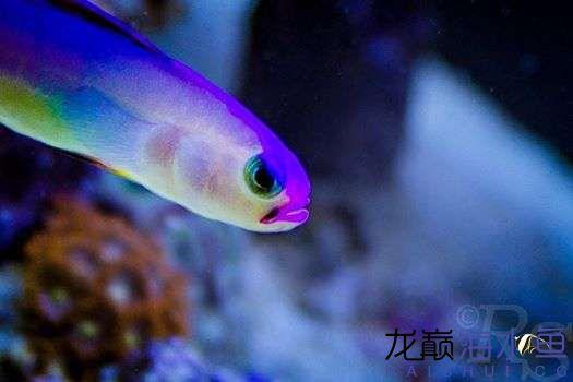 嘉兴水族店常用的鱼饲料这小眼神有点意思啊