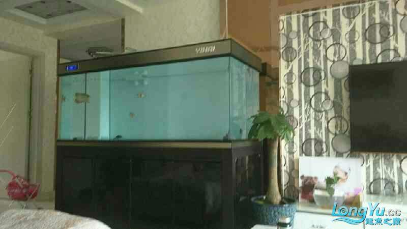 Mu Long (fish farming is happy) Aquaculture Forum ASIAN AROWANA,AROWANA,STINGRAY The5sheet