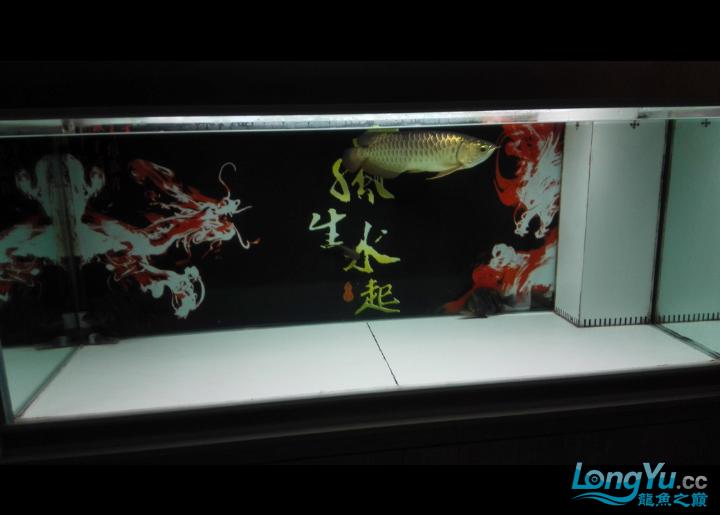马上就杭州水族商城一年了 杭州水族批发市场 杭州龙鱼第1张