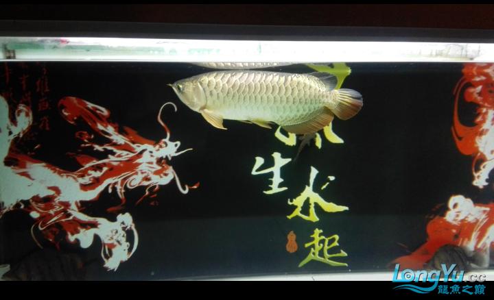 马上就杭州水族商城一年了 杭州水族批发市场 杭州龙鱼第2张