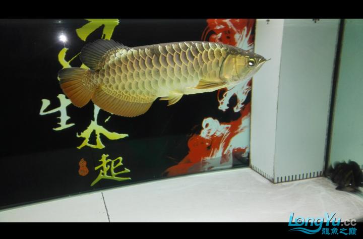 马上就杭州水族商城一年了 杭州水族批发市场 杭州龙鱼第6张