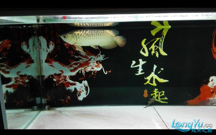 马上就杭州水族商城一年了 杭州水族批发市场 杭州龙鱼第7张
