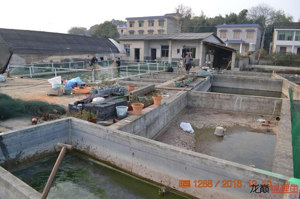 渔场回忆24 长春观赏鱼 长春龙鱼第3张