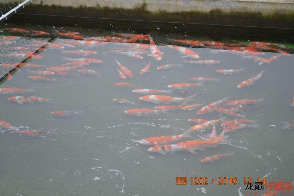渔场回忆24 长春观赏鱼 长春龙鱼第71张