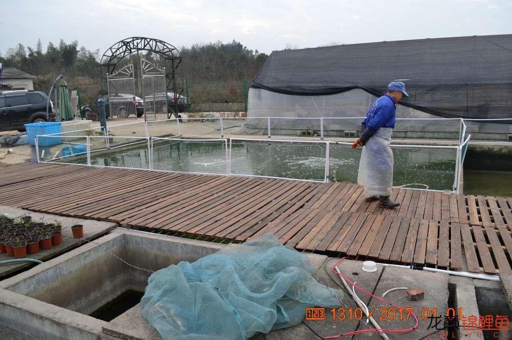 渔场回忆24 长春观赏鱼 长春龙鱼第27张
