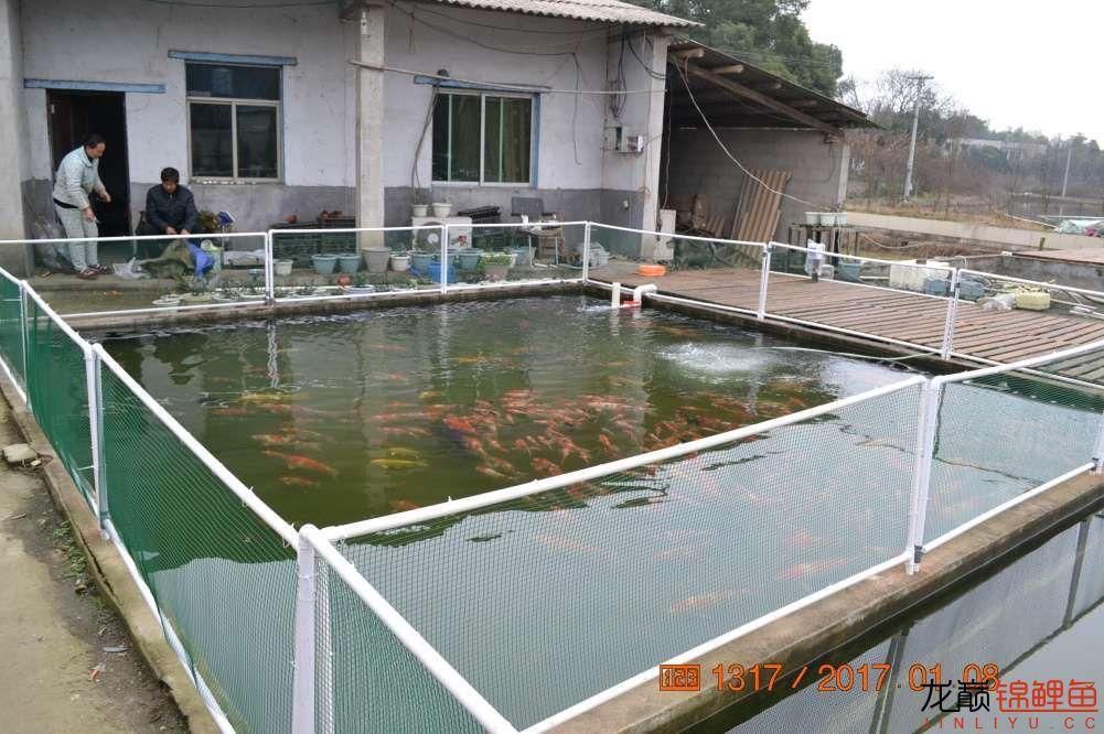 渔场回忆24 长春观赏鱼 长春龙鱼第28张