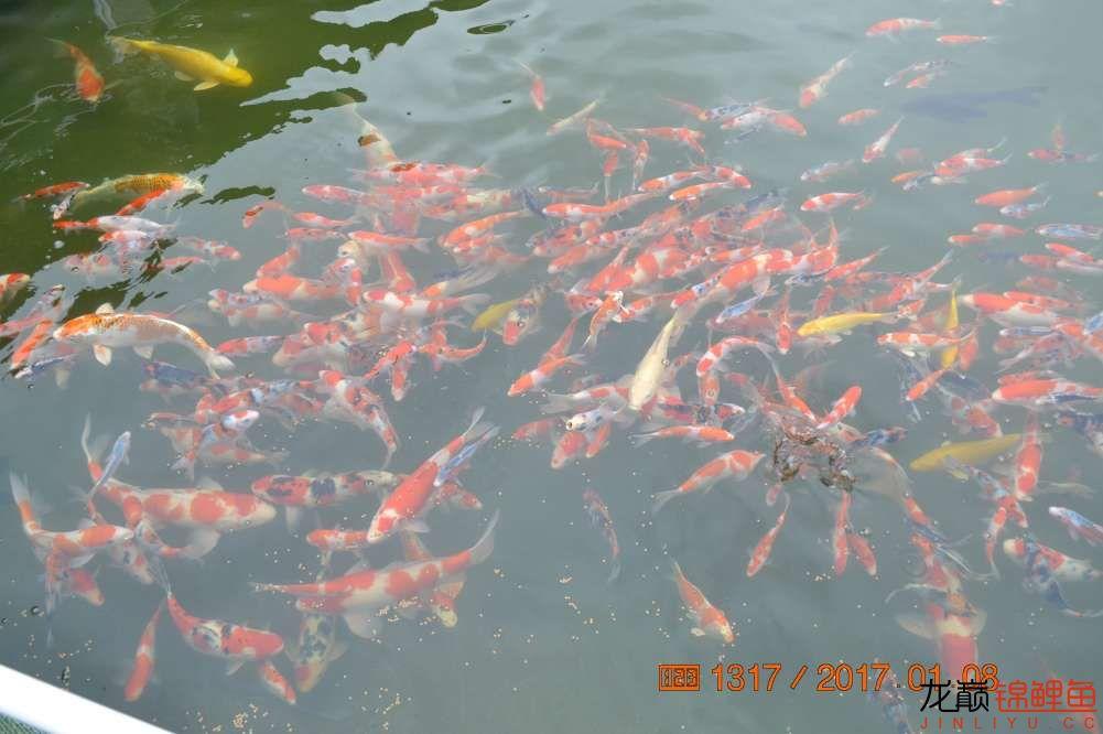 渔场回忆24 长春观赏鱼 长春龙鱼第32张