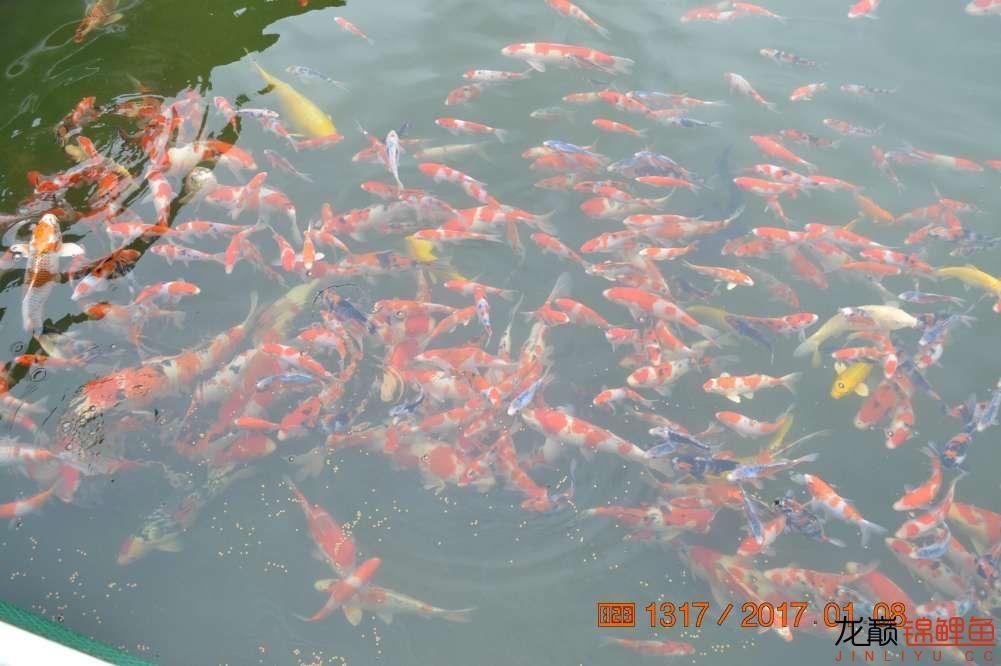 渔场回忆24 长春观赏鱼 长春龙鱼第33张
