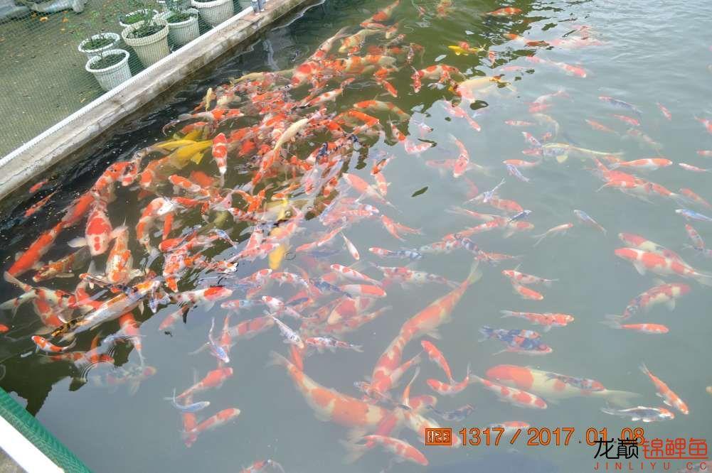渔场回忆24 长春观赏鱼 长春龙鱼第34张