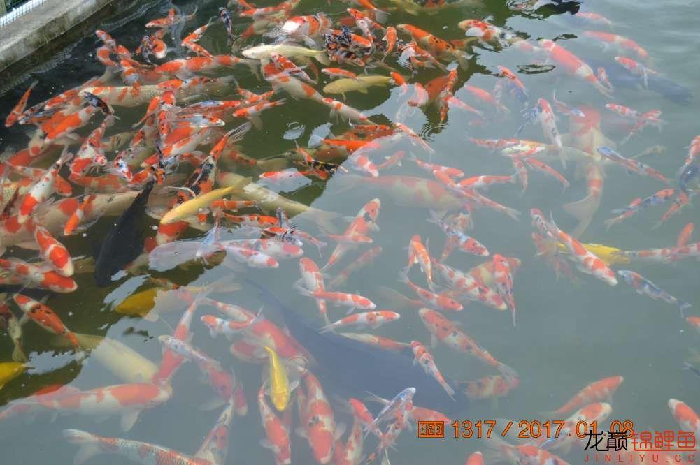 渔场回忆24 长春观赏鱼 长春龙鱼第37张