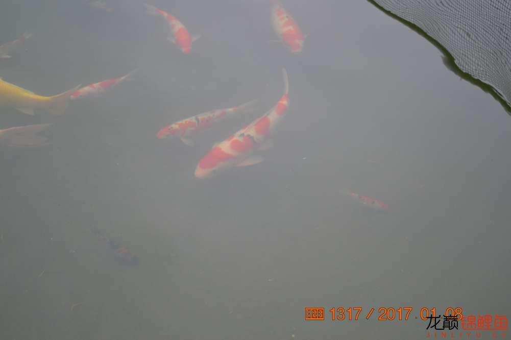 渔场回忆24 长春观赏鱼 长春龙鱼第40张