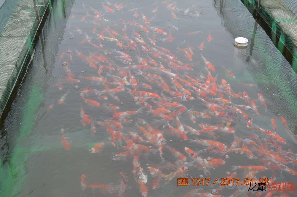 渔场回忆24 长春观赏鱼 长春龙鱼第44张