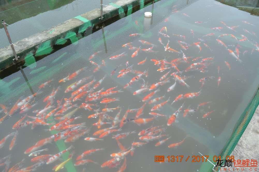 渔场回忆24 长春观赏鱼 长春龙鱼第46张