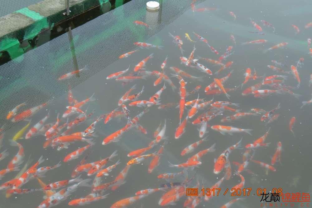 渔场回忆24 长春观赏鱼 长春龙鱼第48张