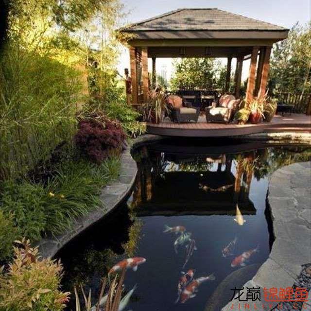 top arowana foodKoi still has to be raised in a pond Aquaculture Forum ASIAN AROWANA,AROWANA,STINGRAY The3sheet