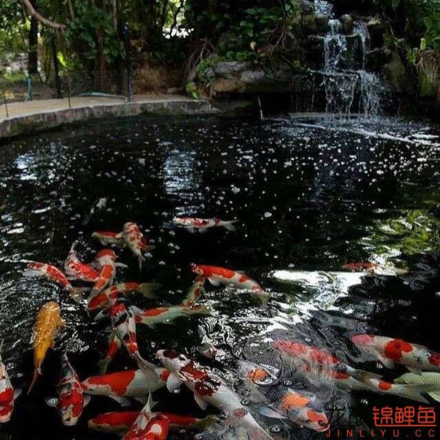 top arowana foodKoi still has to be raised in a pond Aquaculture Forum ASIAN AROWANA,AROWANA,STINGRAY The19sheet