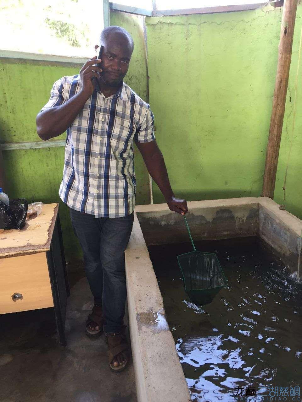 兰州森森鱼缸专卖店具体地址流浪坦桑尼亚探索坦干伊喀湖一 兰州水族批发市场 兰州龙鱼第25张
