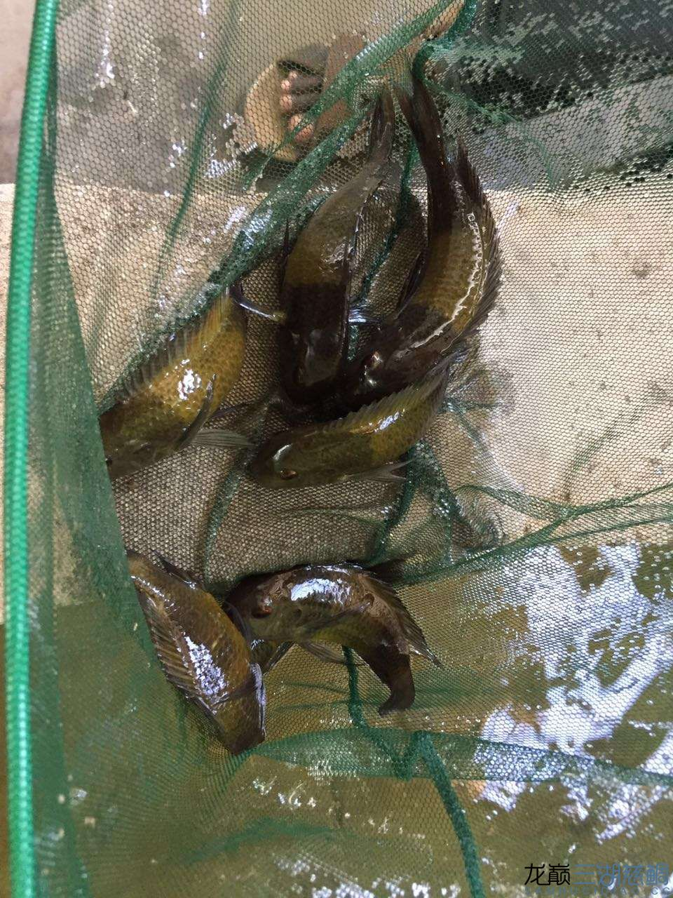兰州森森鱼缸专卖店具体地址流浪坦桑尼亚探索坦干伊喀湖一 兰州水族批发市场 兰州龙鱼第27张