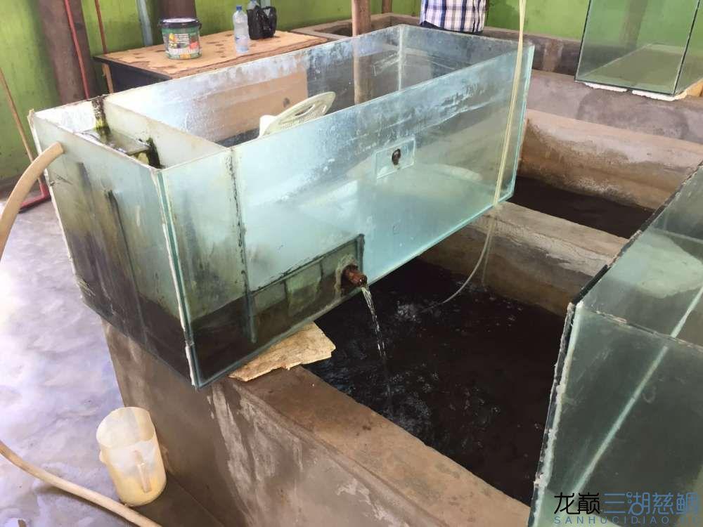 兰州森森鱼缸专卖店具体地址流浪坦桑尼亚探索坦干伊喀湖一 兰州水族批发市场 兰州龙鱼第29张