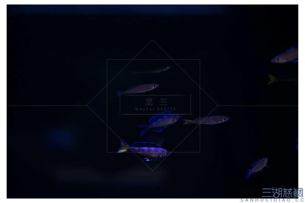 LX5D0191.jpg