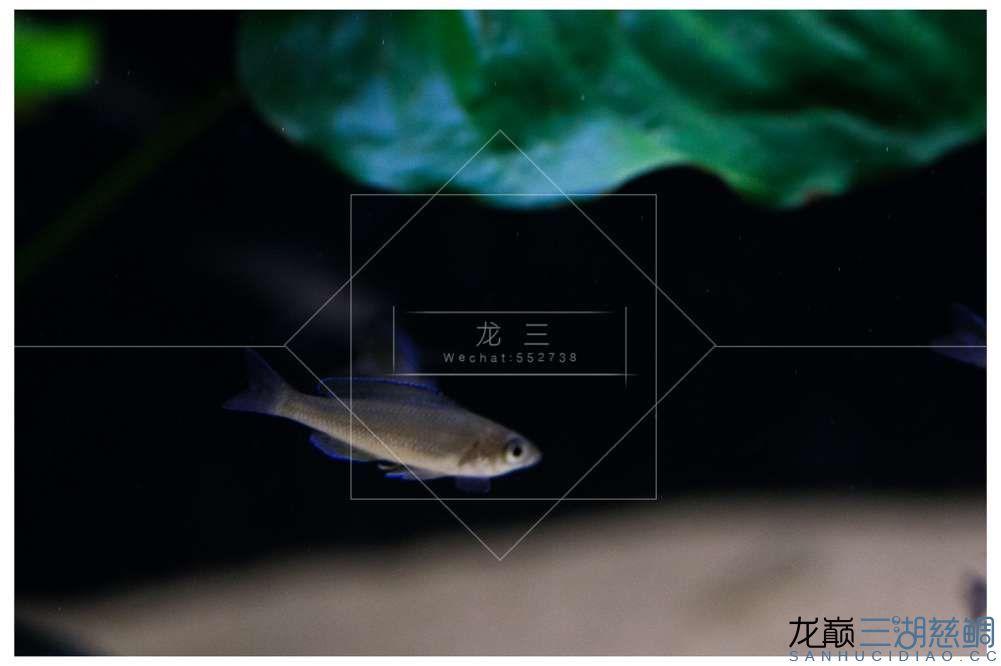LX5D0809.jpg
