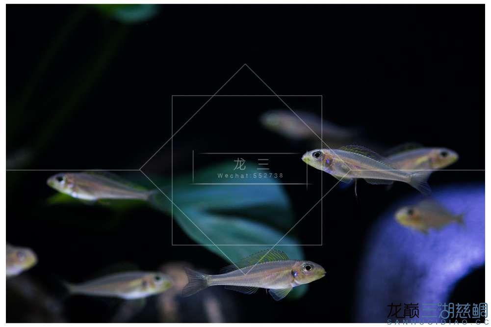 LX5D0491.jpg