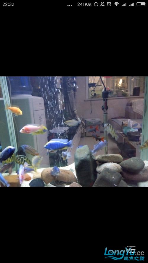 {铭龙会馆]+我的养鱼经历成都鱼缸清洗 成都龙鱼论坛 成都龙鱼第2张