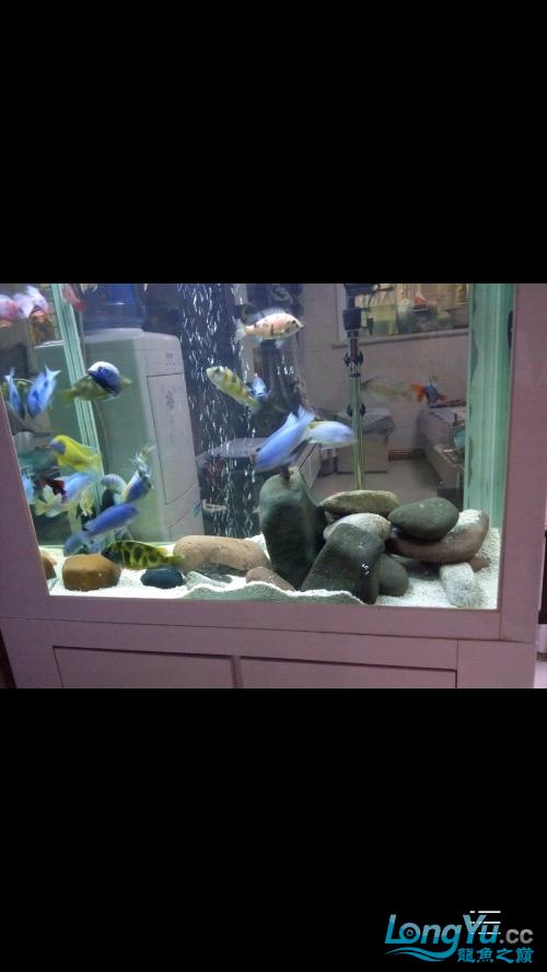 {铭龙会馆]+我的养鱼经历成都鱼缸清洗 成都龙鱼论坛 成都龙鱼第1张