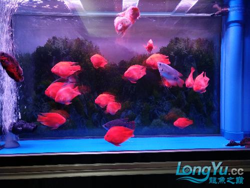 帮忙银川鱼缸水族箱品牌看下水质 银川水族批发市场 银川龙鱼第3张