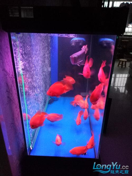 大家看看如何 观赏鱼常见疾病 南通水族批发市场第7张