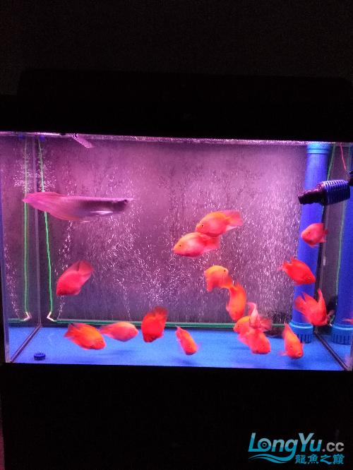 大家看看如何 观赏鱼常见疾病 南通水族批发市场第5张